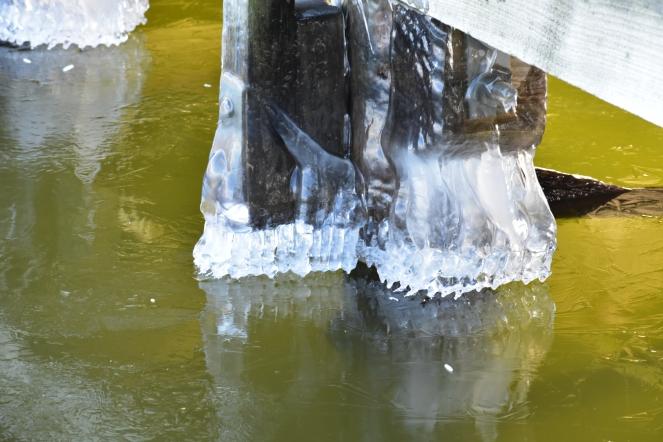 Ice on the dock 2