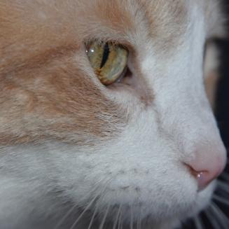 milo eyes 4