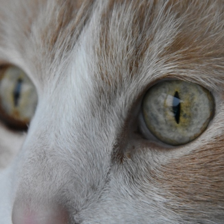 milo eyes3